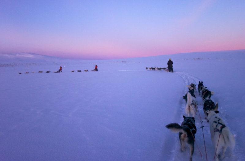 Mit Hundeschlitten durch Schweden