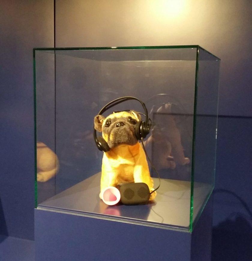 Gerät, das Hundesprache in echte Sprache übersetzt