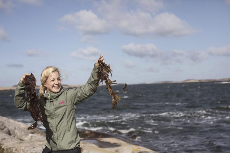 Auf Algen-Safari an der schwedischen Küste