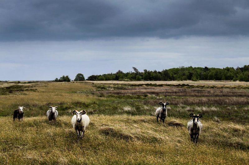 Endelave ist Dänemarks Insel des Jahres